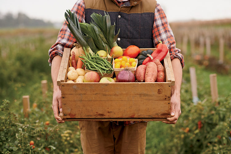 CSA Farm food box